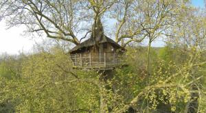 cabane-dans-les-arbres-nid-aigle